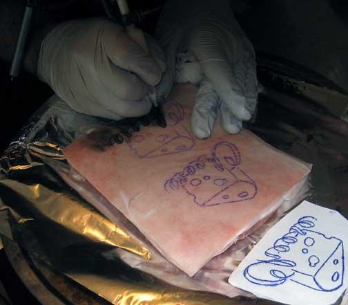 Pork soda and tattooval q a corner ink trails tattoo for Tattoo practice pig skin