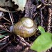 Little snail in the woods