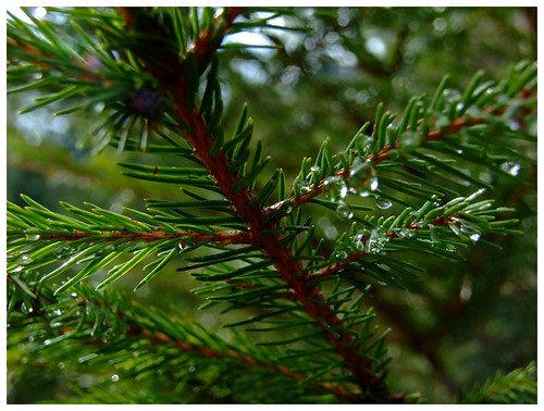 What Is Evergreen Content Beginner 39 S Guide To Evergreen