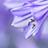 the Perfect Purple Saturdays group icon
