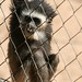 Monkey Park Tenerife, Arona