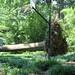 next-door neighbor's tree falls