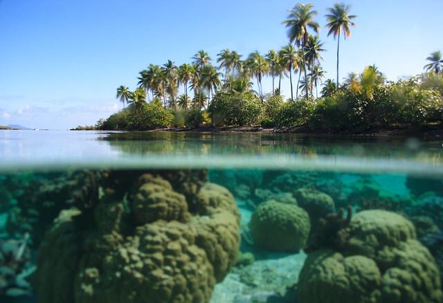 Coral garden, Taha'a.