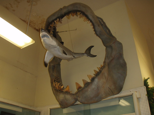 Megalodon jaws and model