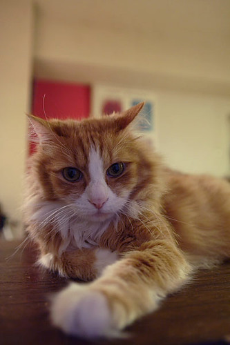 cat_0921