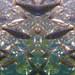 Small photo of Abundant Fish