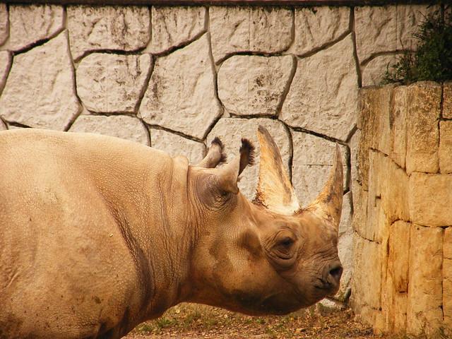 the badak sumbu flickr photo sharing