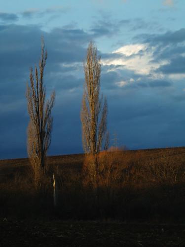 blue sky plants nature landscape hungary olympus tokina adapter m42 mf manualfocus baranya e400 anawesomeshot theperfectphotographer