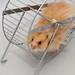 Hamster wheel by sualk61