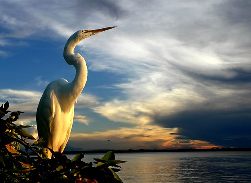 -Heron and the sunset.-