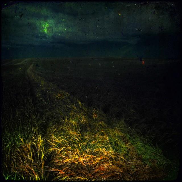 Wheatfield - Night