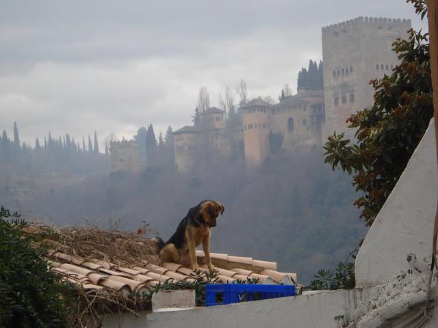 Perro en la Alhambra