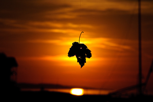sunset orange tree yellow spider leaf michigan web petoskey