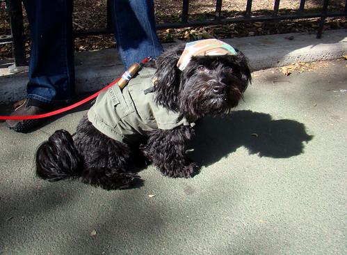 fidel castro dog