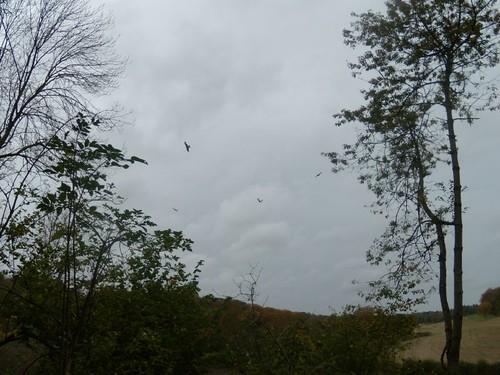 tree, 4 kites