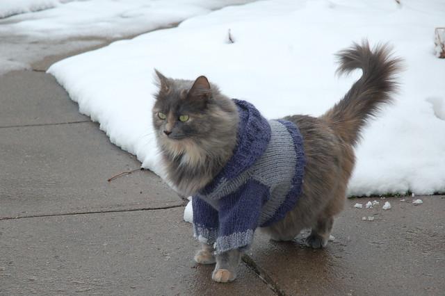 Cat Hoodie Making Me Purrrrr