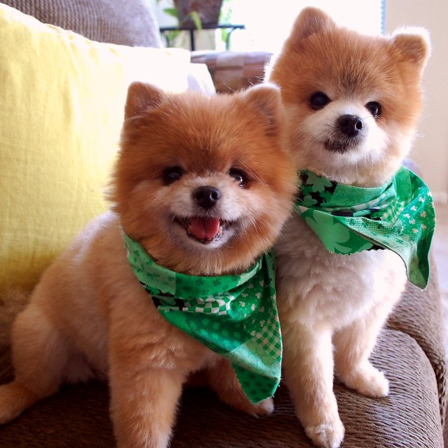 "My Pot of Gold.  ""Happy St. Patrick's Day Everyone!"" from TJ and Teddy!"