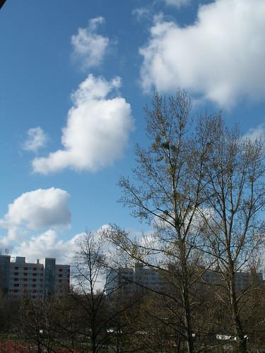 Wolken und bläuliche Streifen alle so weit vom Baum die mich lieben von Herzen in Dresden 03