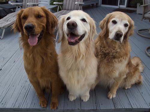 Trio of Gold