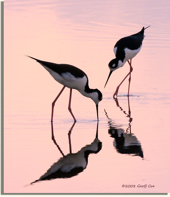 Stilts at Sunrise
