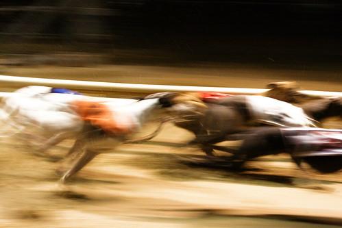 Dog racing - motion blurred