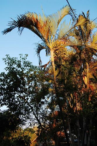 morning tree green sunrise golden leaf