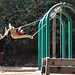 Small photo of Swinging in the playground at Alum Rock Park
