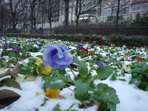 Snow Flower by celesteh