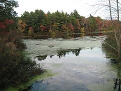 Nature Walks Fall