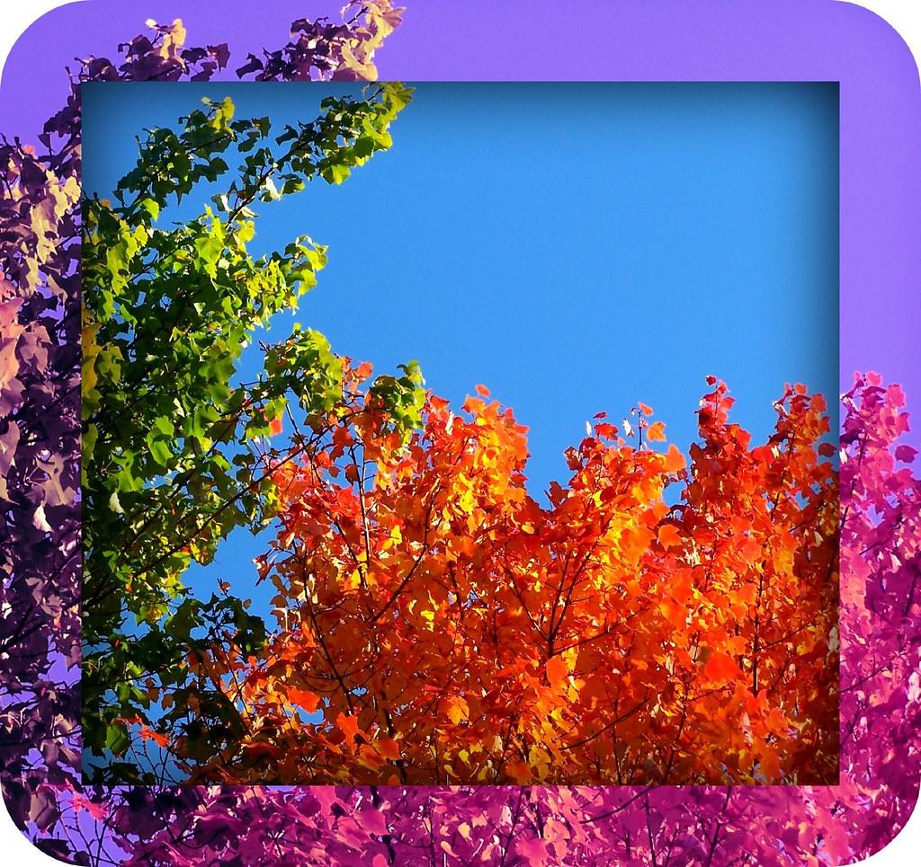 Shades of Autumn Joy