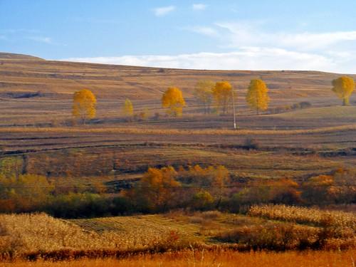 autumn trees colors landscape