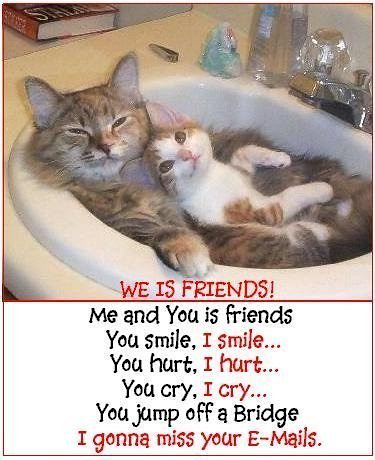 3059099185 47682441ce funny cats a 005