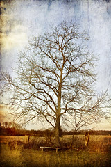 an antiquated tree
