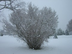branch, winter, tree, snow, ice, frost, winter storm, freezing,