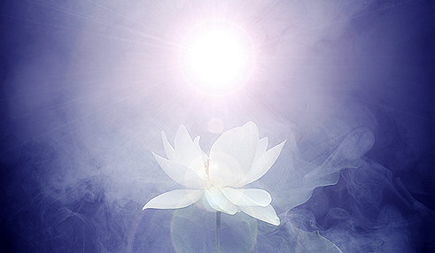 Lotus Flower Imgp7691 ハスの花 莲花 گل لوتوس Fleur De L