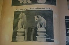 LOLcat scrapbook