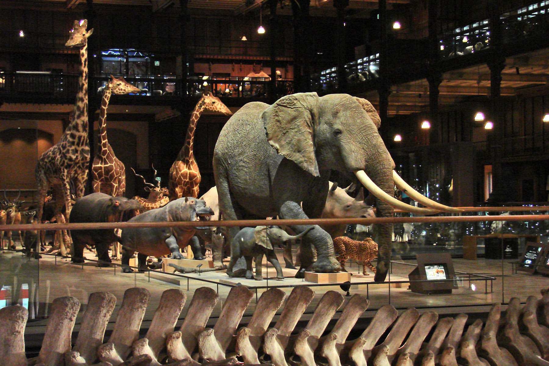 La Galerie De L Evolution Museum National D Histoire
