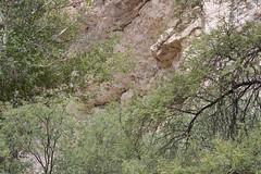 2008_07_18_2158_MontezumaCastel-2008_CA-Vac
