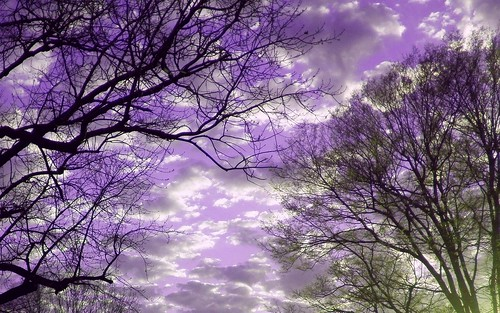 pictures desktop trees sunset shadow wallpaper sky color colour green colors silhouette clouds creativity photo skies colours purple image screensaver crystal photos unique background widescreen creative picture images christian creation backgrounds writer write create wallpapers capture silhouetted desktopwallpaper screensavers irfanview 1610 purplesky 1440x900 writes 1680 1680x1050 desktopwallpapers widescreenwallpaper 10millionphotos crystalwriter christianwriter 1610aspectratio