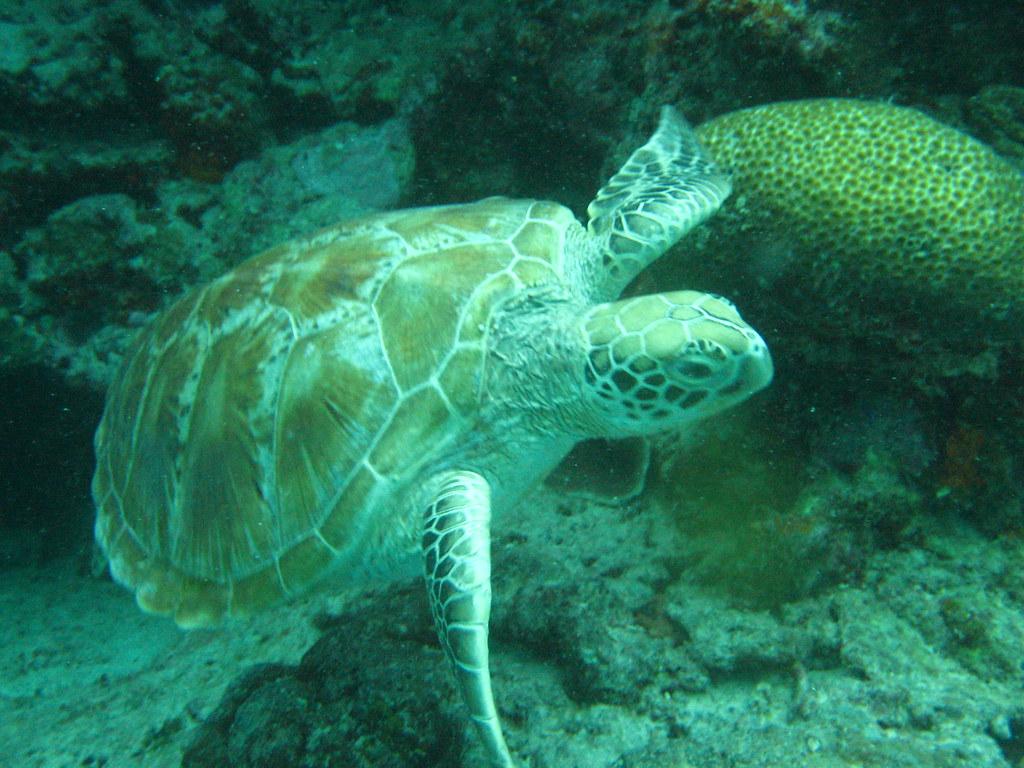 Tartaruga fotografata durante un concorso