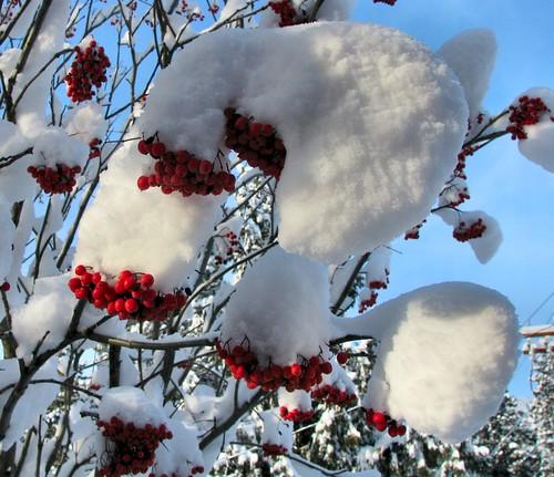 December 2008 Winter 498