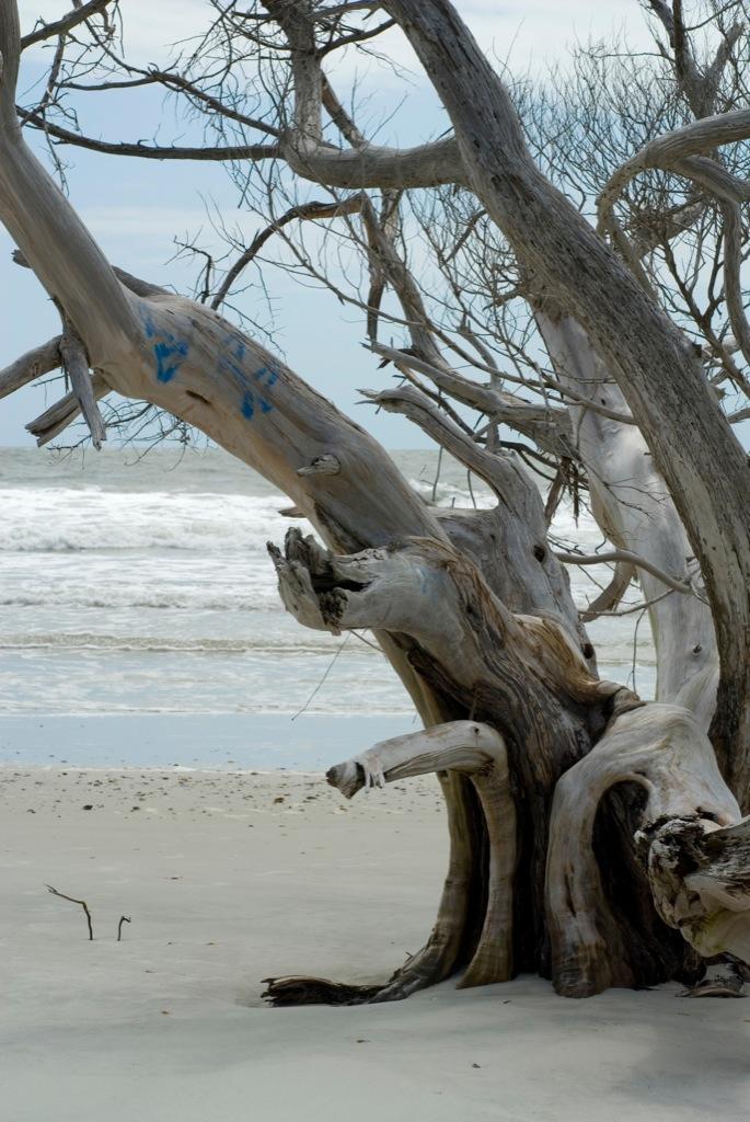 Фотография дерева