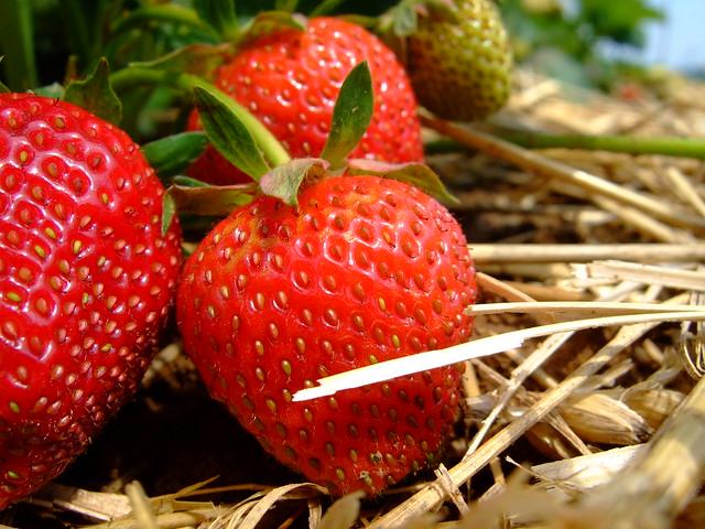 strawberry field from Flickr via Wylio