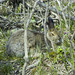 Small photo of Hare, annoyed