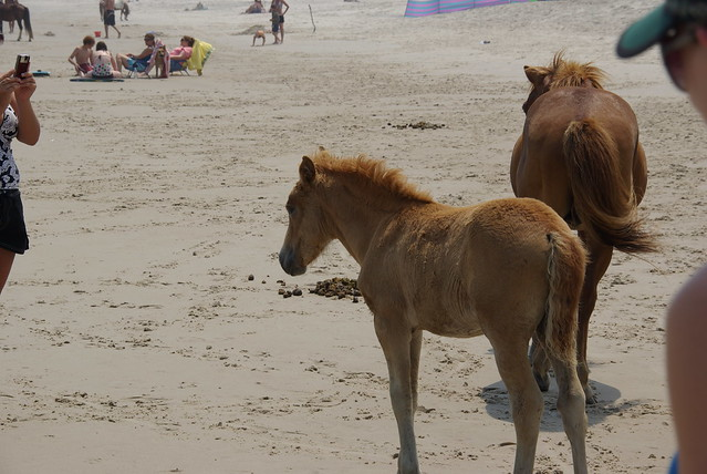 Horse pooping on beach a gallery on flickr for Negative show pool horse racing