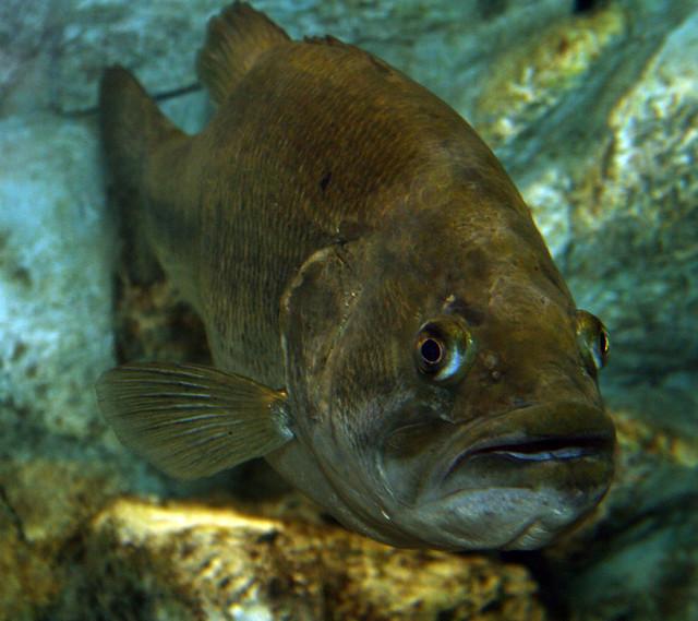 2008 07 25 athens tx freshwater fish hatchery 2989 for Fish hatchery texas