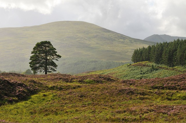 Header of Affric