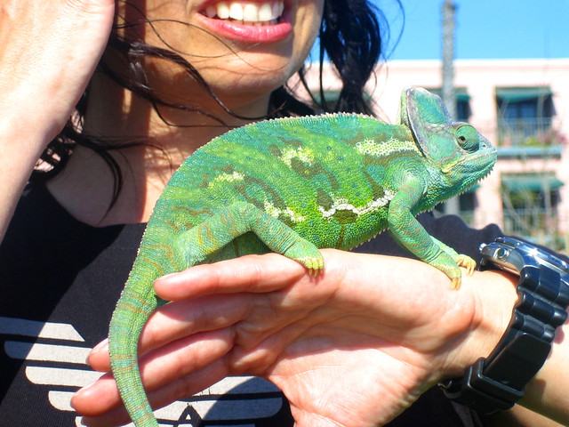 She loves her pet chameleon | Flickr - Photo Sharing!