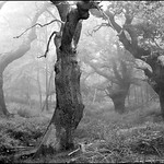 Old Oak B&W