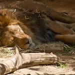 Los Angeles Zoo 050